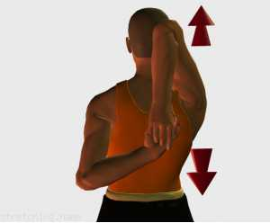 Stretching routine recommended for  triathlon,  arms,  fast,  chair,  office,  triceps brachii.