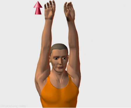 Stretching routine recommended for  basketball,  athletics,  trekking,  volleyball,  golf,  handball,  kitesurfing,  fencing,  arms,  chair,  office,  pilates,  back relax,  flight,  trapezius,  deltoid.